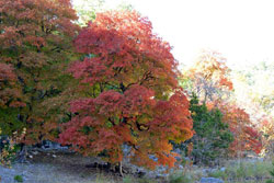 fall foliage picture from November 14, 2011