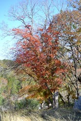 fall foliage picture from November 27, 2011