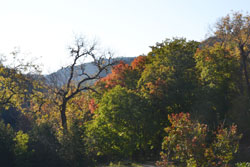 fall foliage picture from October 31, 2011