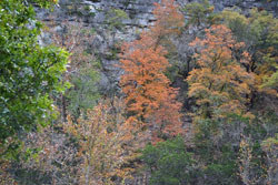Fall foliage picture by Richard Treece, on November 19, 2012.