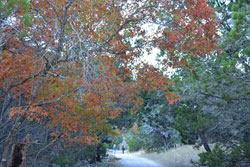 Fall foliage picture by Richard Treece, on November 27, 2012.