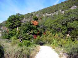 Lost Maples 09/07/06 - Click on picture to view a larger image. Use your back button to return.