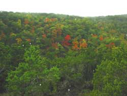 Lost Maples 10/24/06 - Click on picture to view a larger image. Use your back button to return.
