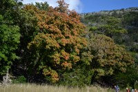 Lost Maples Pic from Oct. 20, 2014