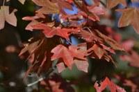 Fall foliage pic taken on Oct. 26, 2015