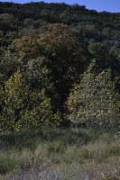 Fall foliage pic taken on Nov. 2, 2015