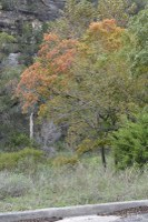 Fall foliage pic taken on Nov. 9, 2015