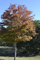 Fall foliage pic taken on Nov. 16, 2015