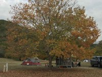 See a larger version of this photo of foliage at the Campground.