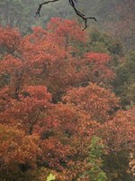 See a larger version of the first photo of the Oct. 31 foliage report;  taken on Oct. 27, 2018.