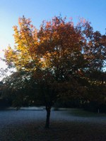 See a larger version of the first photo of the Ocon of the first photo of the Nov. 14 foliage report.