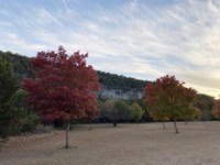 See a larger version of this photo of the Nov. 5, 2020 fall foliage report.