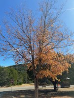 See a larger version of this photo of the Nov. 19, 2020 fall foliage report.