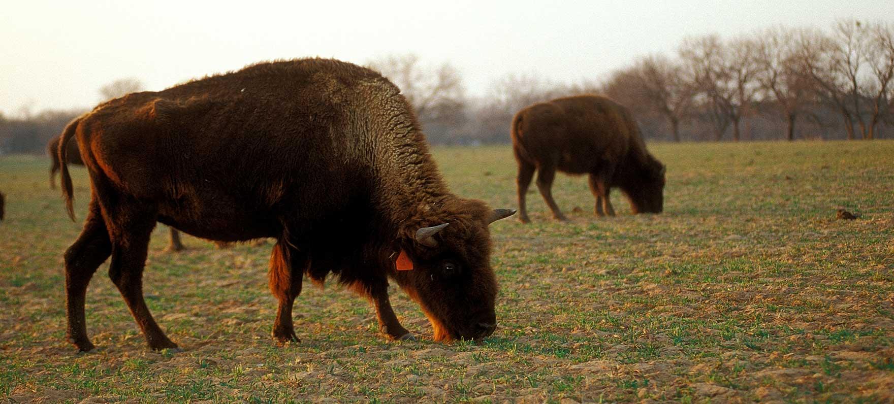 Lyndon B. Johnson State Park & Historic Site — Texas Parks ...