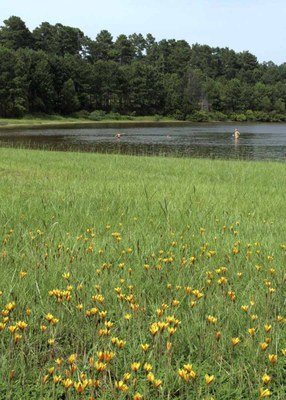 View of wildflowers on the edge of the lake, with kids swimming