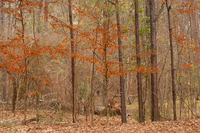Forest in the fall with orange leaves