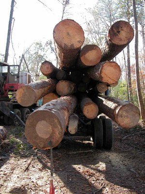 logs on a truck