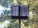 Bat box on a tall pole