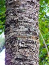 Closeup of rough tree bark with many little holes