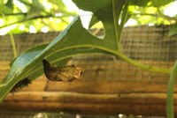 cocoon hanging from the limb of a bush
