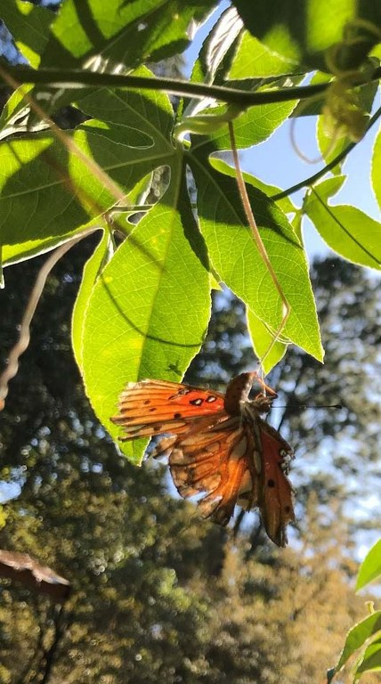 tattered butterfly hanging from a branch