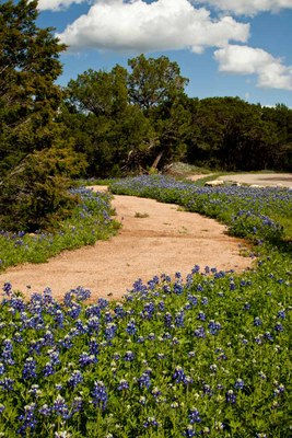 Caliche trail winding through bluebonnets.
