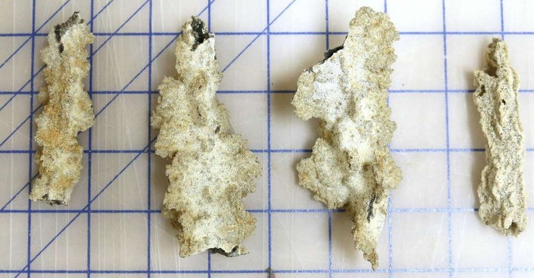Four fulgurites of various sizes and shapes