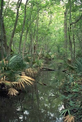 Water surrounded by dwarf palmettos.