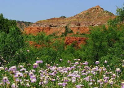 flowers blooming with red cliffs in the background