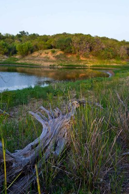 Sunset view of edge of lake, with deadwood and grasses in the foreground.