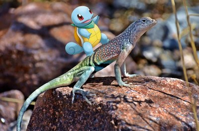 Cartoon image of a Pokemon superimposed on a picture of a lizard, to look like it is riding on the lizard.