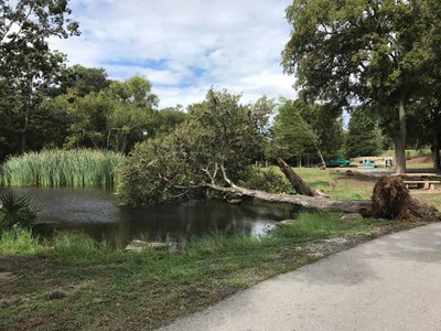 Tree down over pond