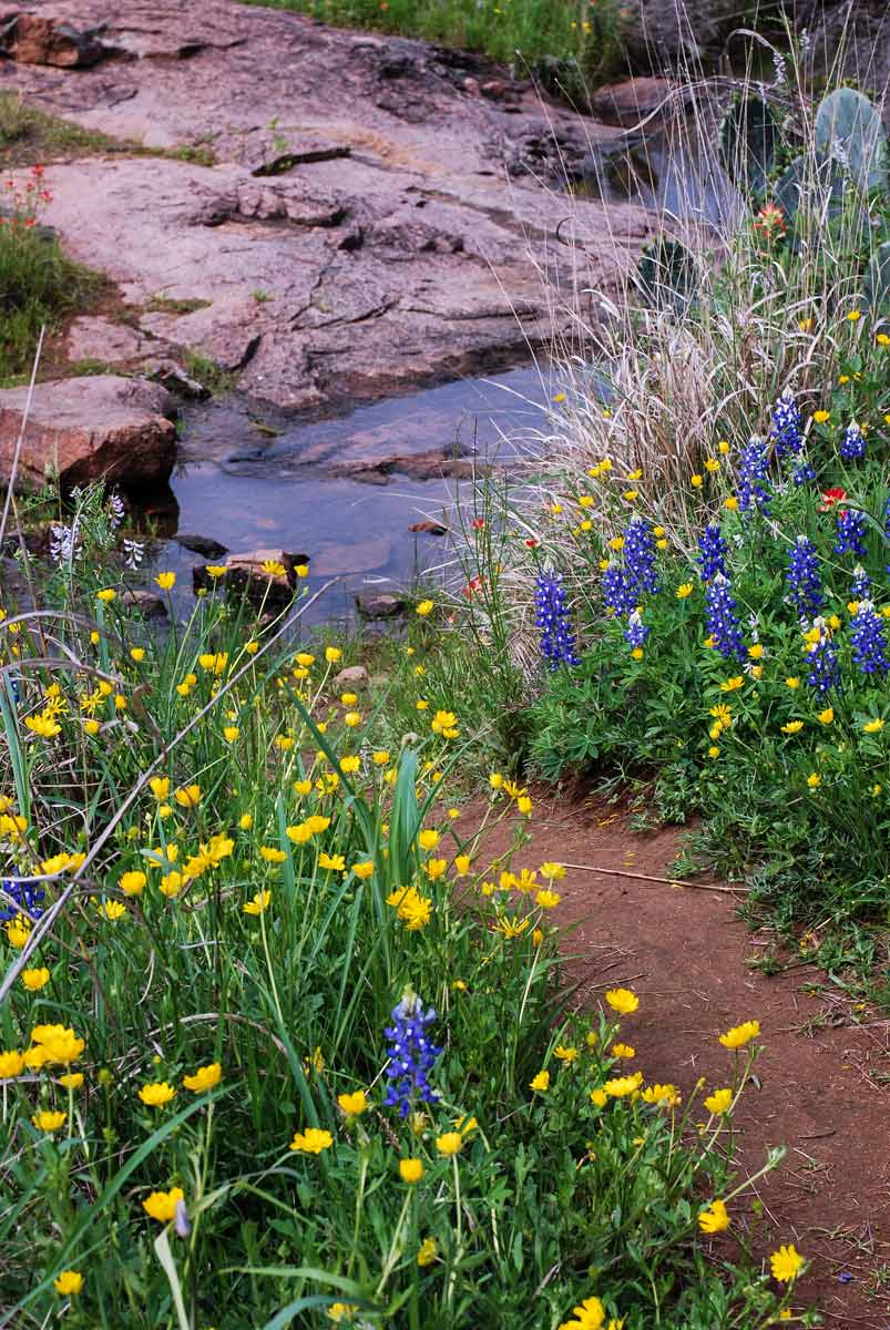 Wildflowers texas parks wildlife department yellow blue flowers with small pool in the background izmirmasajfo
