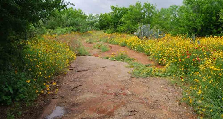 Wildflowers and primitive road at Chaparral Wildlife Management Area.