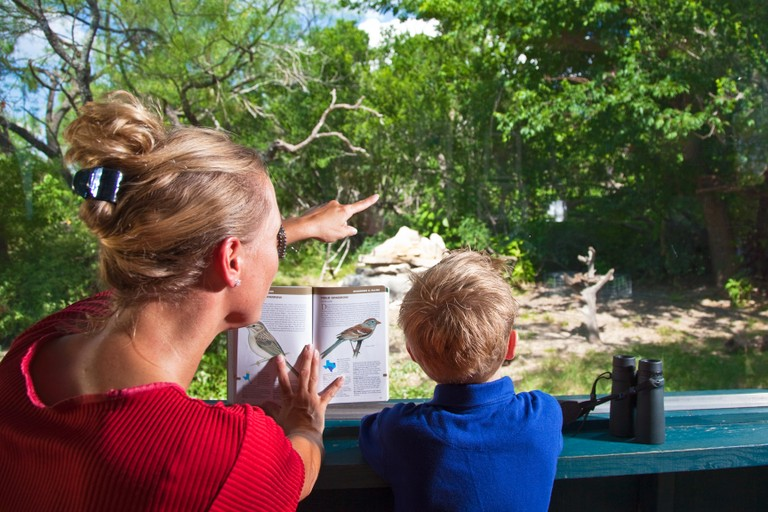 Birding texas parks wildlife department for Winter vacation spots in texas