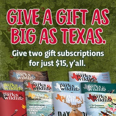 graphic promoting magazine gift subscriptions