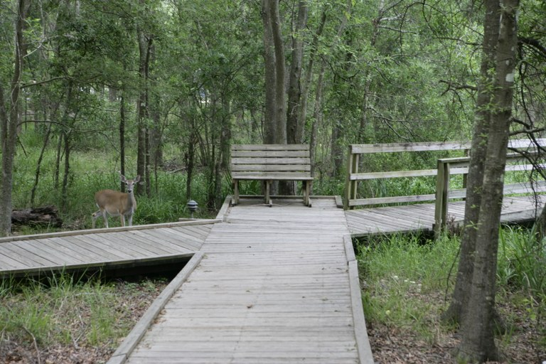 View of accessible boardwalk