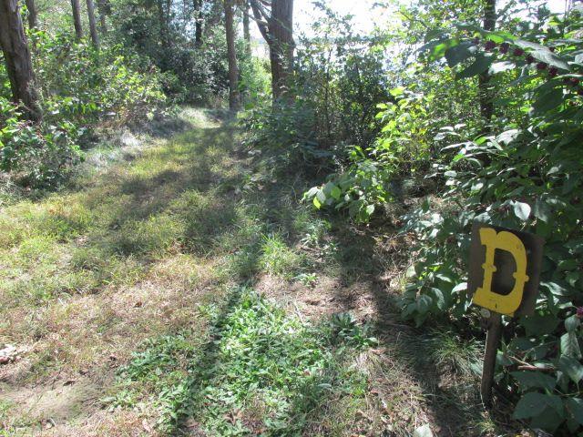 purtis creek state park primitive campsites  hike