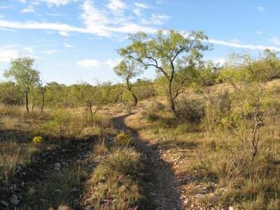 Trail meanders through a prairie area