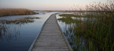 The Gambusia Nature Trail, a boardwalk through the marsh.