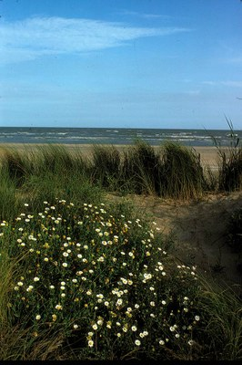 Wildflowers, grass and the Gulf