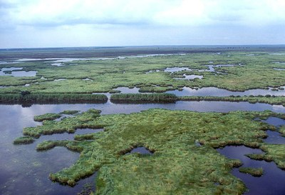 View of the marsh, with plants and water alternating