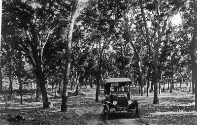 old car driving beneath pecan trees