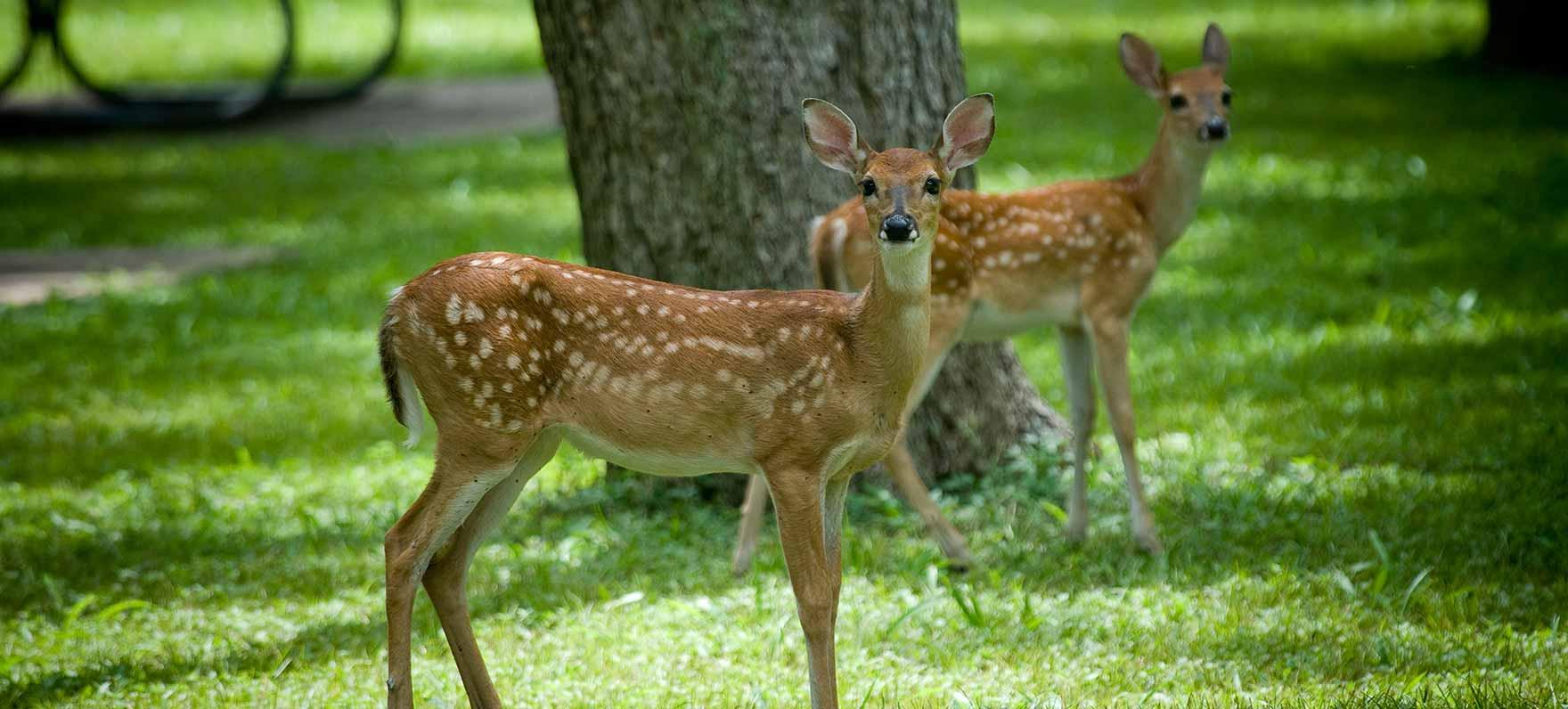 stephen f  austin state park  u2014 texas parks  u0026 wildlife
