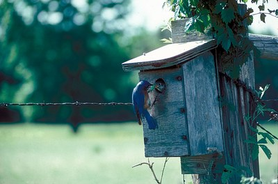 Bluebird nest box