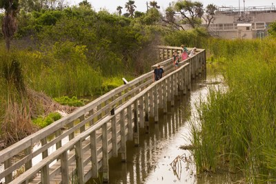South Padre Island wetlands